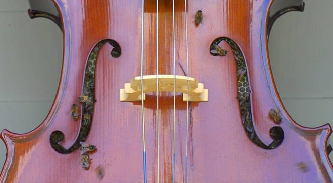 除了可以演奏,大提琴竟然还可以当作蜂窝
